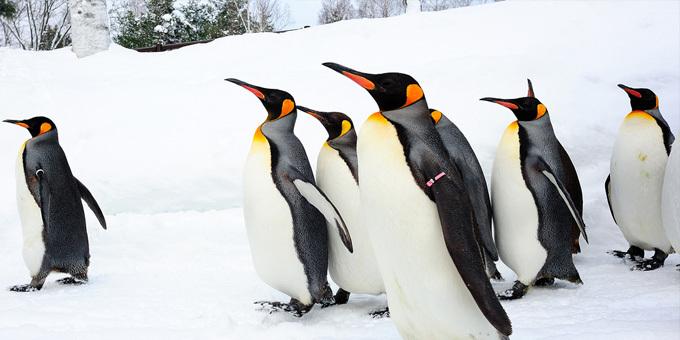 Penguin sanctuary prompts tourism venture