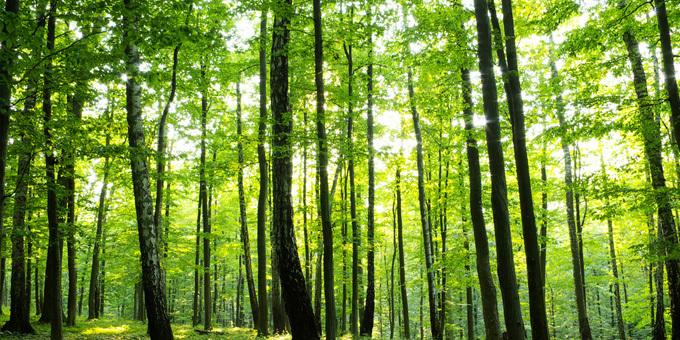 Iwi role in million tree plan