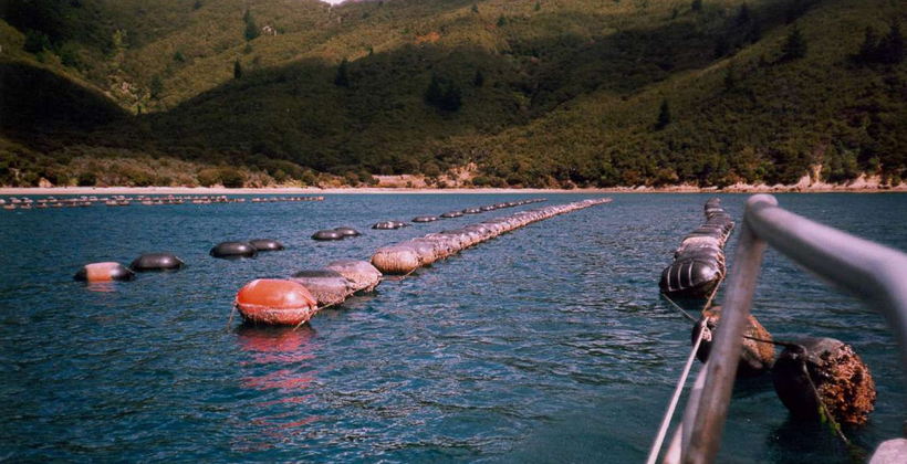 NZ First Aquacorp policy all at sea