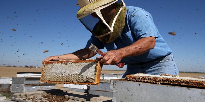Manuka gold rush for Maori landowners