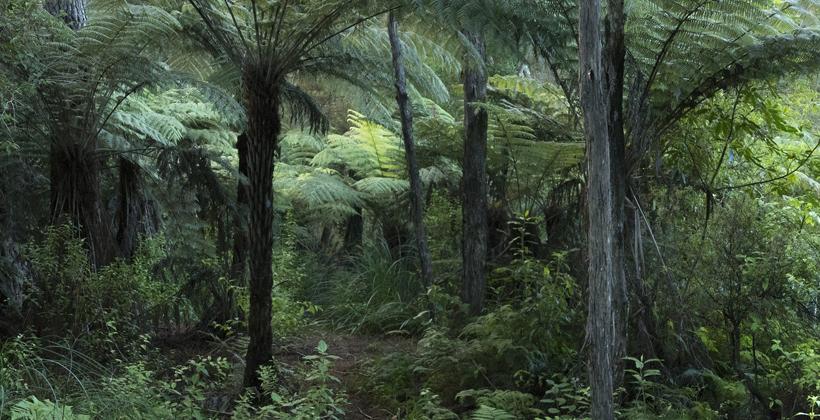 Billion Trees grants for Te Tai Tokerau