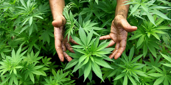 Young voters keen on cannabis reform