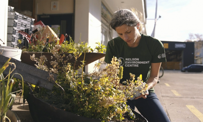 Matauranga Maori welcomed into environment hubs