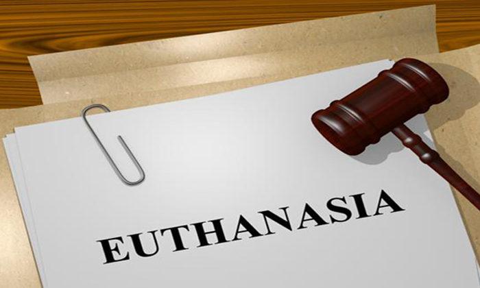 Maori voters split on euthanasia vote