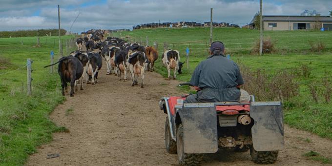 Farmers wary at Maori consultation plan