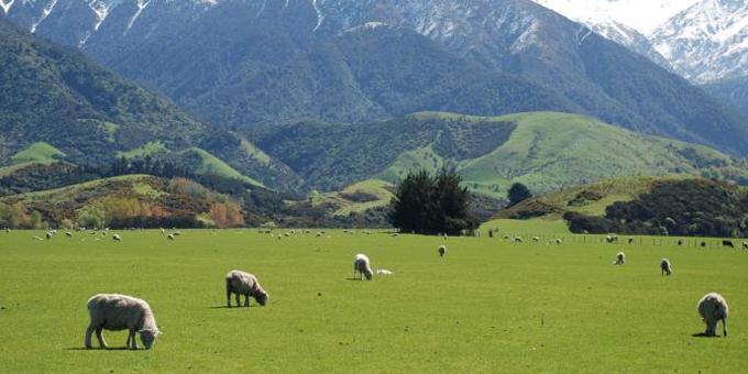 Kahungunu looks to boost farm profits