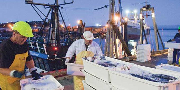 Fishy stories undermine catch estimate