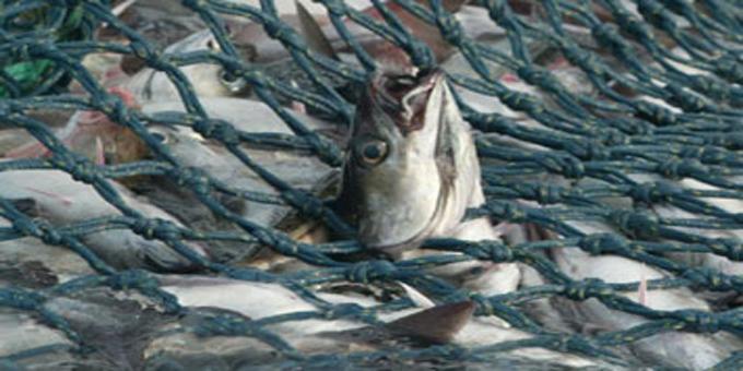 Iwi eye fisheries settlement profit