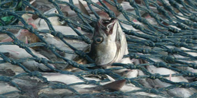 Holes poked in fish data net
