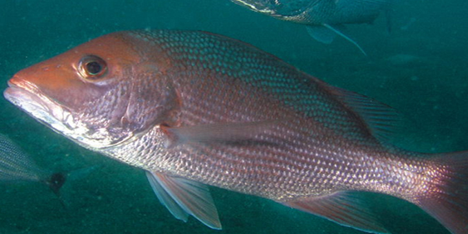 Time needed for fisheries change
