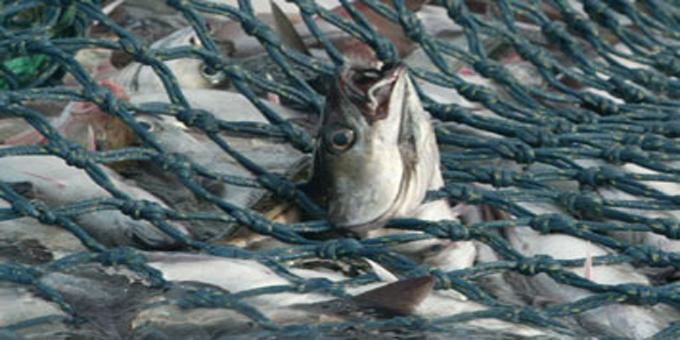 Maori fishing sector over-taxed