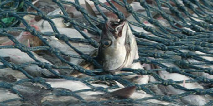 Chain of waste to supermarket fish