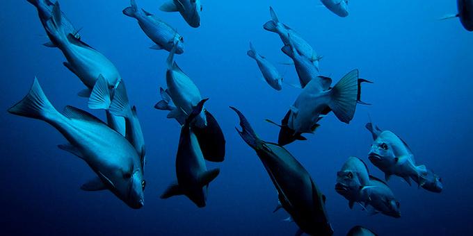 Aesthetic test dooms fish farms