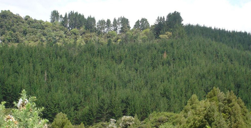 Forestry ETS rules get overhaul