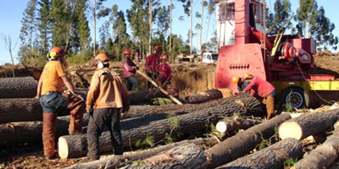 CTU keeps up pressure over forest deaths
