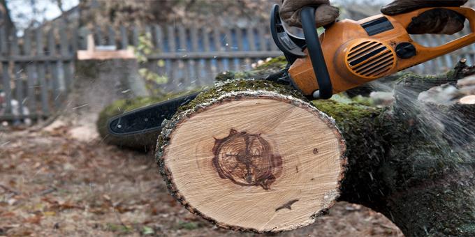 CTU prosecutes forestry employer