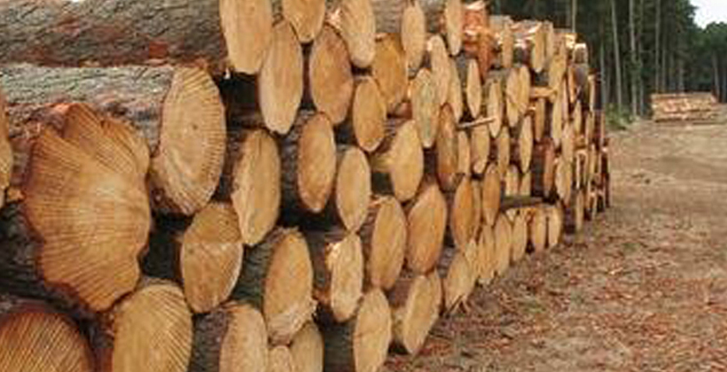 Maori stand out in forestry scheme support