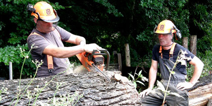 Forestry pressure puts workers at risk