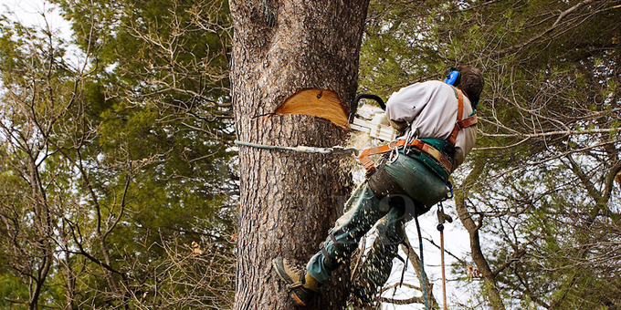 Industry to review forestry safety