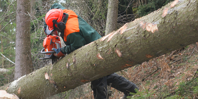 Forestry workers denied union safety advice