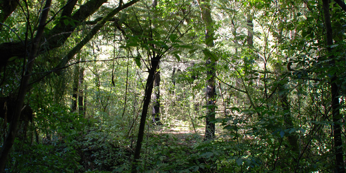 Tough talk lays foundation for forest future