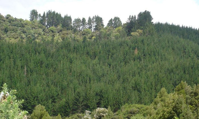 Scion hooks up with Māori foresters