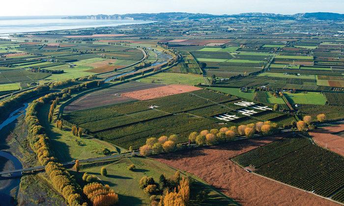 PGF productivity boost for Hawkes Bay Maori farms