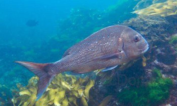 Fishing ban upsets iwi