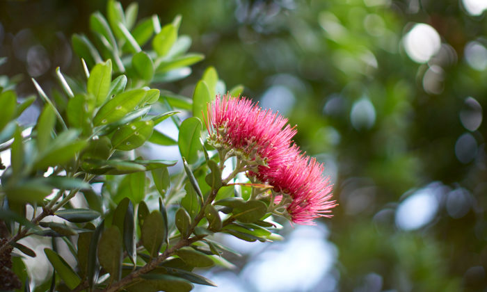 Kaipara tree planting will bring new life to harbour