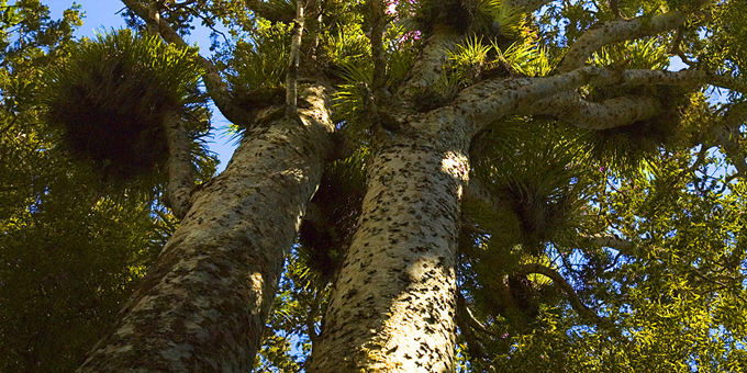 MP wants to see native trees replanted