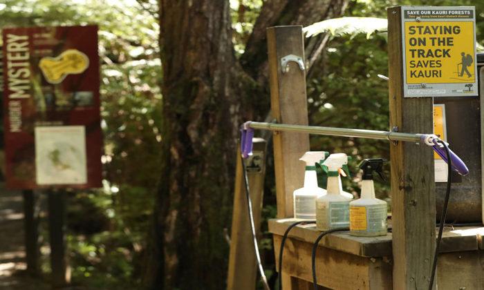 Kauri rescue effort gets Tree Fund boost