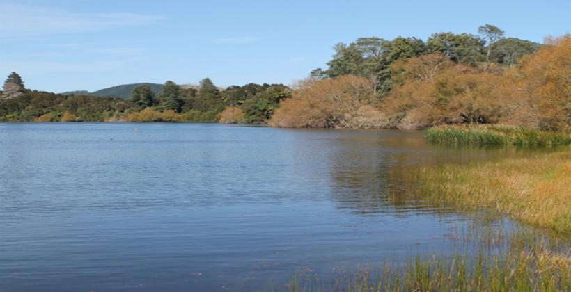 Lake Okaro closed by algal bloom