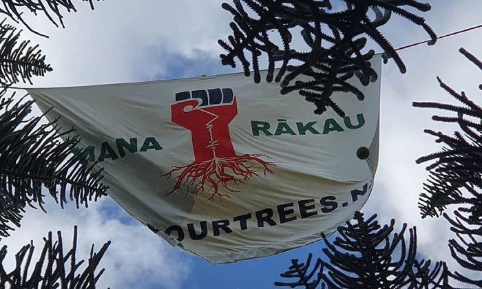 Canal Rd trees felled after 245-day protest