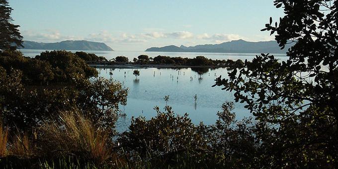 Manurewa cleared to remove mangroves