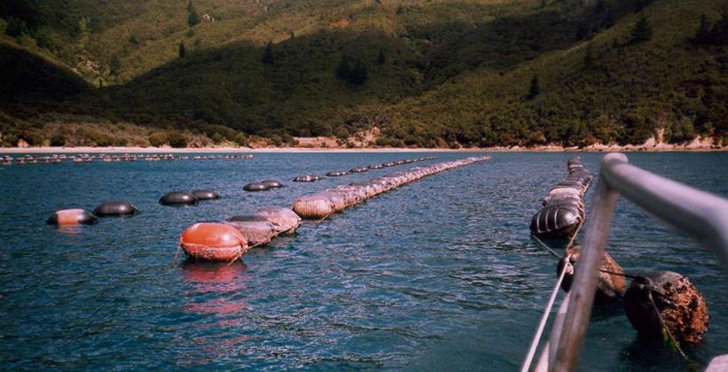Maori Aquaculture Settlement revisited