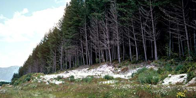 Research adds value to forestry