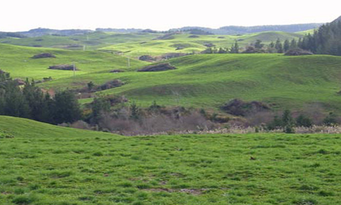 Māori landowners targeted for forest fund
