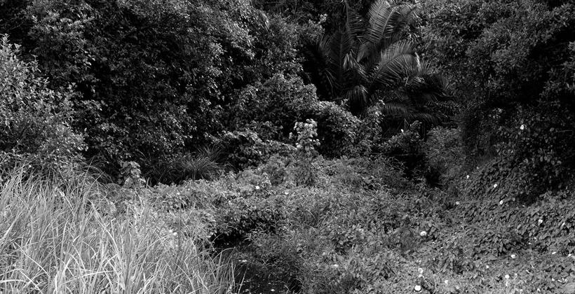 Film techniques challenge Maori artists