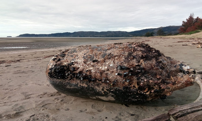 Mussell farms not so golden for bay locals