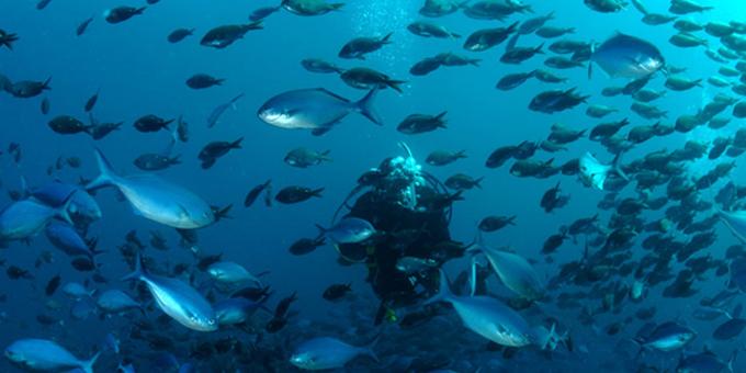 Taihoa call on marine reserve vote