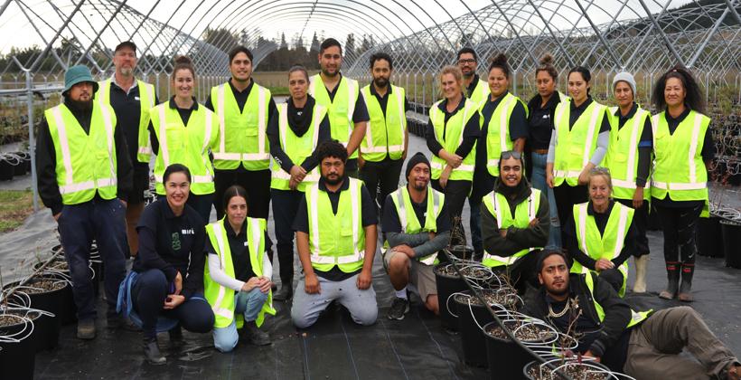 Te Teko blueberry farm largest in Aotearoa - owned by Maori for Maori