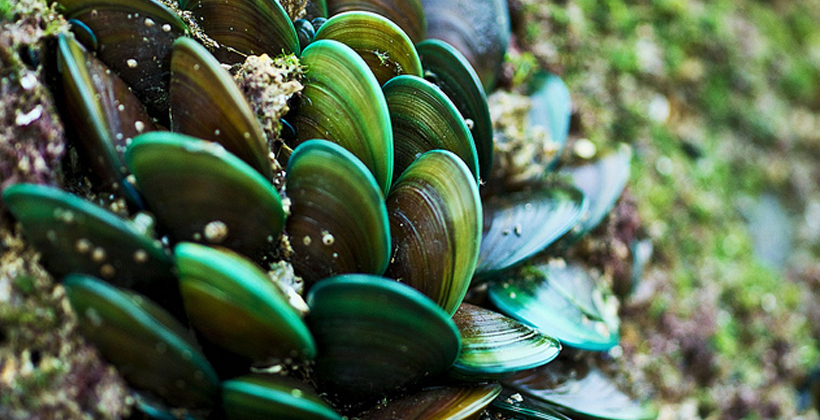 Resource consent means time to mussel up