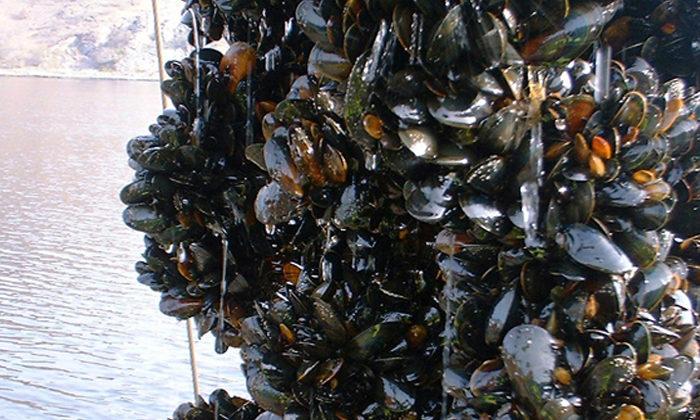 Ōpōtiki mussel factory gets PGF boost