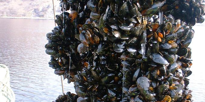 Whangaroa mussel farm approved