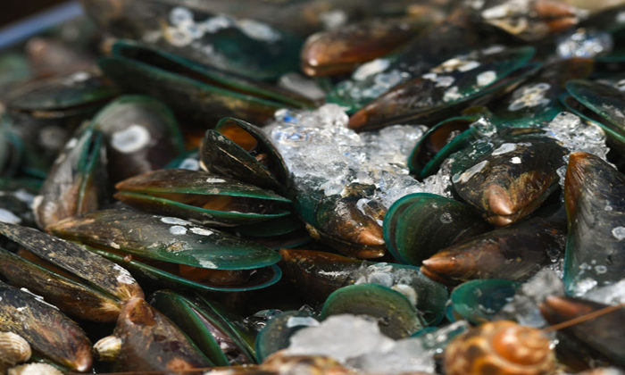 Spike in poisoning from raw mussels