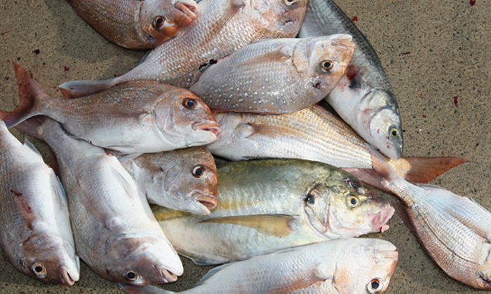 Ngapuhi finds bar in fisheries reform plan