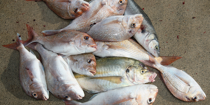 Iwi count benefits of fish settlement