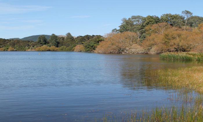Health warning issued for Lake Okaro