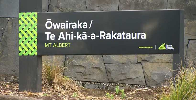 Owairaka tree defenders lost court challenge