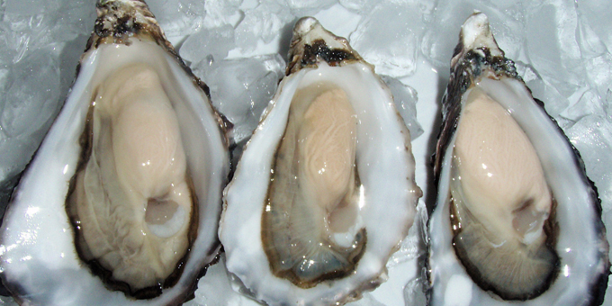 Virus-resistant oysters found